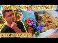 Тест всех видов сушеной рыбы в ресторане!