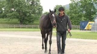 セレクトセール2009(1歳)上場予定馬(No.106) 牝 鹿 2008/2/1生 父ジ...