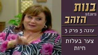 בנות הזהב   עונה 3 פרק 3 | צער בעלות חיות