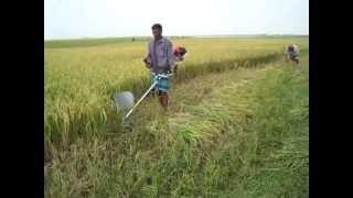 Paddy Rice Cutter