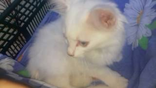 Найденый котёнок Снежок ♡