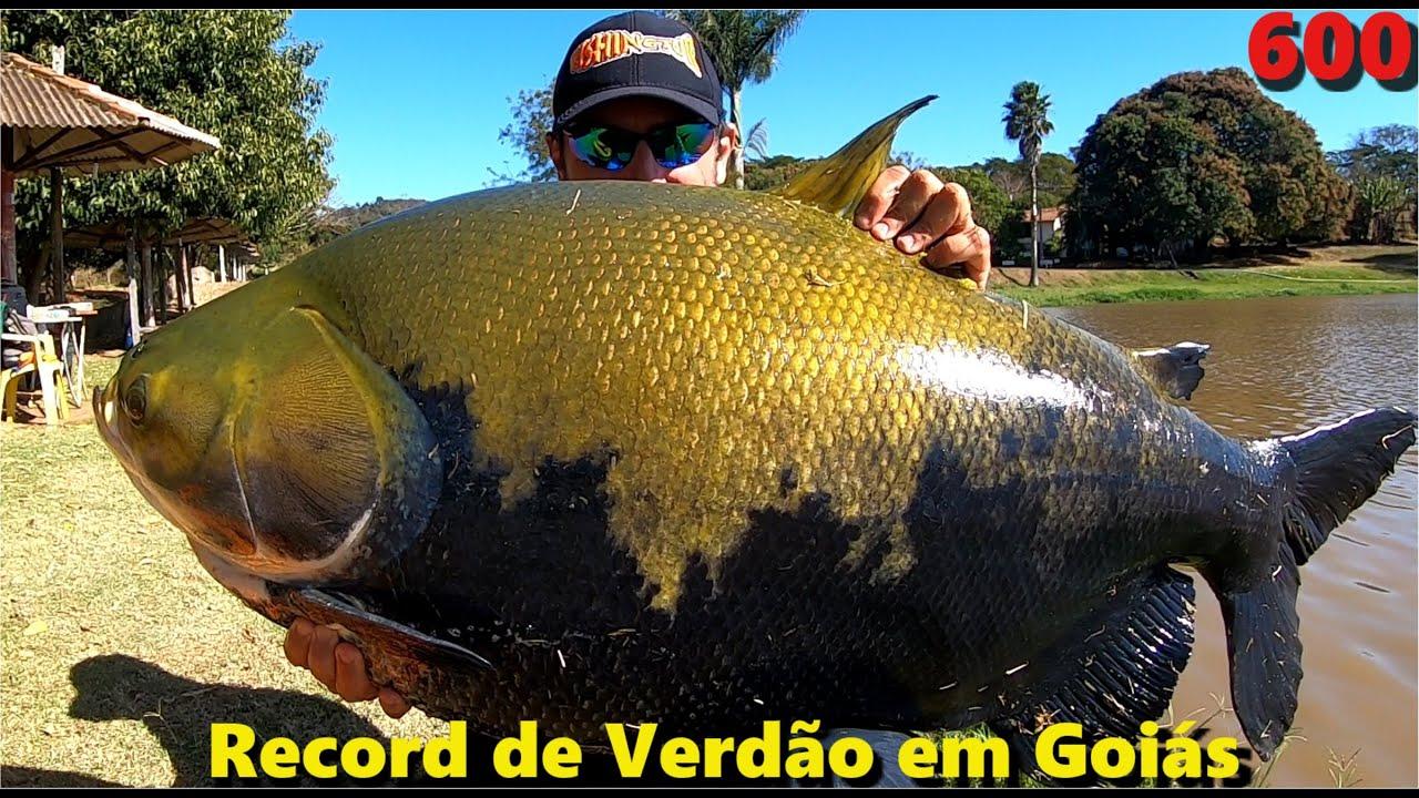 RECORD de VERDÃO em Goiás no Programa Fishingtur na TV 600 no Clube de Pesca BARATÃO