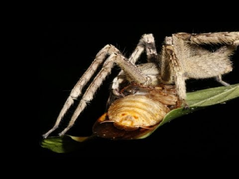 Spider vs Penis (Priapism) - Smarter Every Day 98