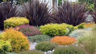 Ornamental grasses Design For Your Garden