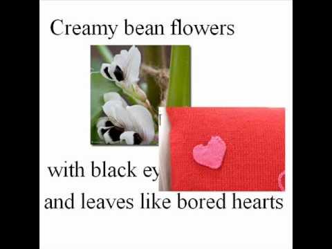 summary of tulips by sylvia plath