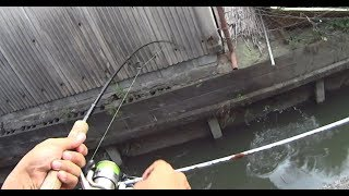 家の中からルアー釣りをしてみると・・・ thumbnail