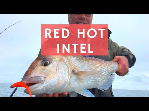 Fishing Is On Fire Inshore - LATEST INTEL