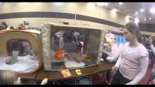 Выставка кошек Ростов-на-Дону @ Вертол-Экспо 2013