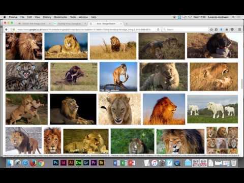 Adobe Dremweaver CC - London Zoo part 2