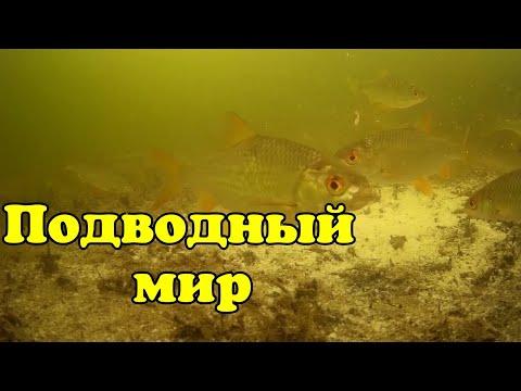 Подводный мир. Поиск рыбы. Караганда. Underwater World. Search For Fish. Karaganda.Full HD.