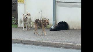 В Костроме продолжает расти количество бездомных собак