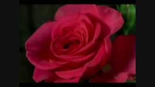 ♥ ♥ ♥ Poésie  du  Coeur  ( Pourquoi Pleurer ) With English Traduction