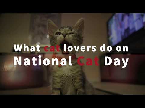 National Cat Day - 2017