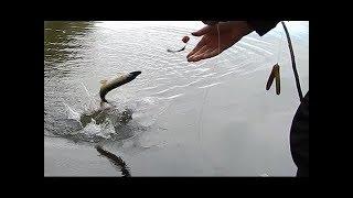 Рыбалка на ЩУКУ на закидушки на живца