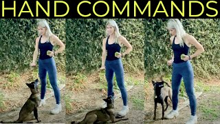 HOW TO TRAIN WITH HAND COMMANDS | NONVERBAL DOG TRAINING | Belgian Malinois