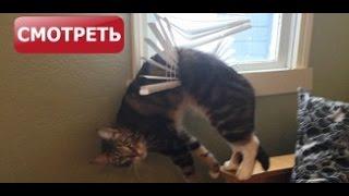Коты, которые искали приключений и… нашли...