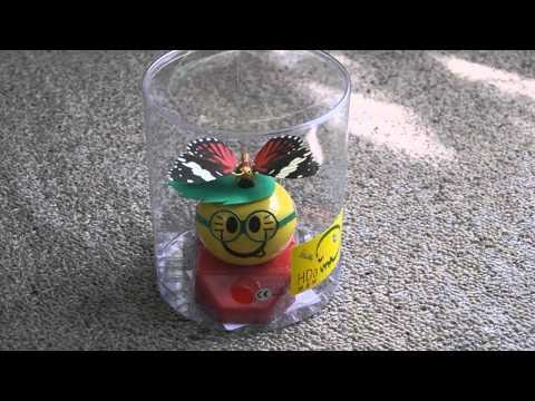 Solar Powered Butterfly On Smiley (with glasses)