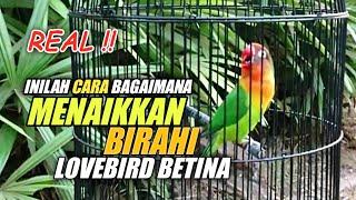 Download lagu CARA MENAIKKAN BIRAHI BETINA