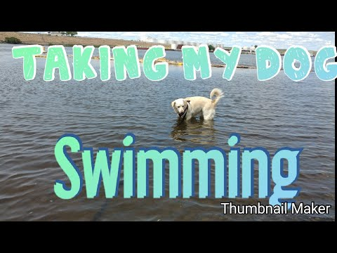 Taking my dog swimming