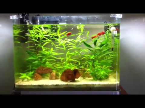 Il mio acquario poecilidi 60 litri youtube for Acquario 60 litri prezzo