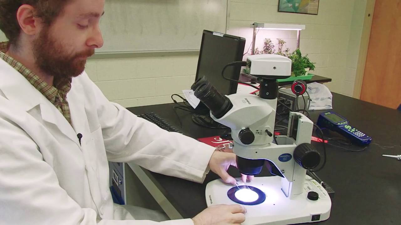 How to use the dissecting microscope - YouTube