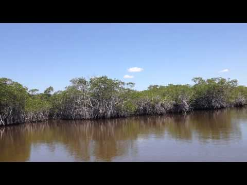 River of Grass: An Airboat Tour of the FL Everglades