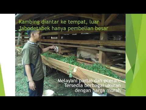 jual-beli-kambing-online-kirim-ke-babakan-pasar-bogor-hubungi-0895-2186-8651
