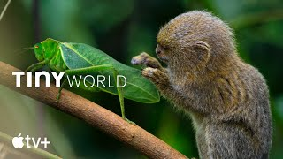 Bande annonce Tiny World