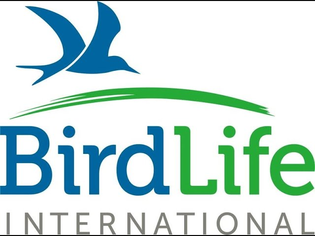Join Saudi Birding for the October Big Day and Help Support BirdLife International!