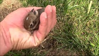 Wild Baby Rabbits in the Yard at the Office