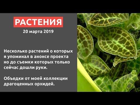 #ФЛОРАРИУМ ВА-БАНК Растения