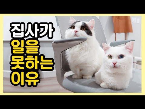 고양이 집사가 일을 못 하는 이유 😁 오랜만에 투샷!
