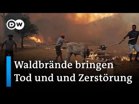 Tote und Verletzte bei Waldbränden in der Türkei | DW Nachrichten