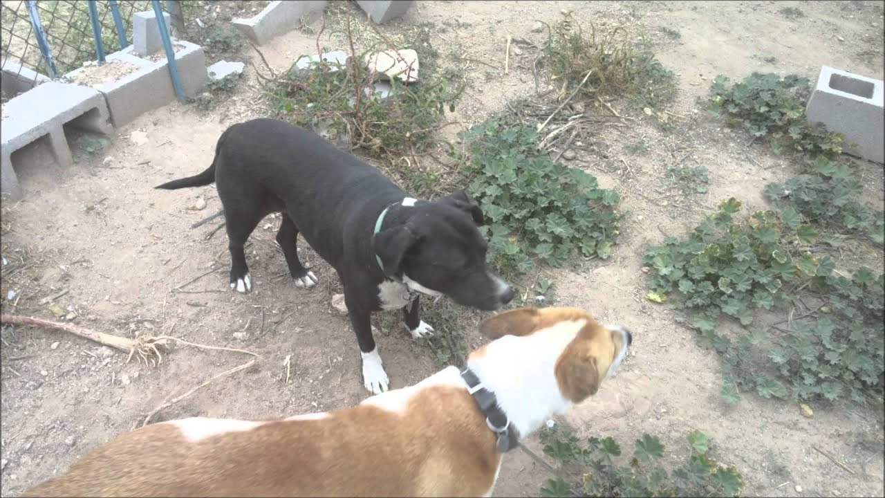 the dogs need a home come on tucson the dogs need a home come on tucson