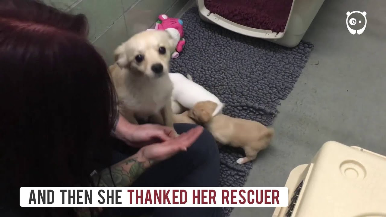 Mama Dog And Puppy Rescue Youtube
