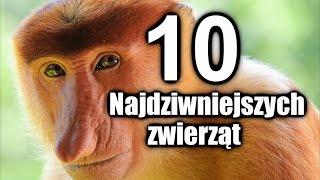 TOP 10 Najdziwniejszych zwierząt na Ziemi