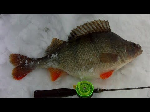 РЫБАЛКА НА КРУПНОГО ОКУНЯ И ГИГАНТСКУЮ ПЛОТВУ . Ice Fishing
