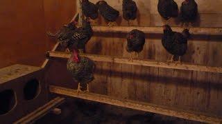 Утепление на зиму сарая для кур изнутри: фото и видео