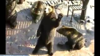 Видео прикол Смешные медведи
