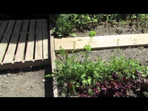 The Biltmore School Fairchild Challenge #7 2014-2015 Gardens and Green Spaces