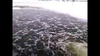 платная рыбалка пруд Черноморец ,зимовка: 31.01.2016г..