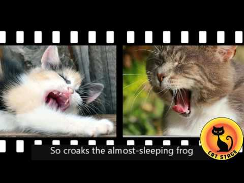 Cat Stage | funny Yawning Cats
