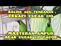 Terapi Cucak Ijo Gacor Full Tembakan Kasar Masteran Ampuh Untuk Cucak Ijo  Mp3 - Mp4 Download
