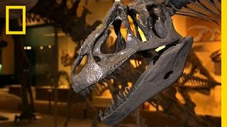 How Do You Dismantle a Dino? (Very Carefully) | National Geographic