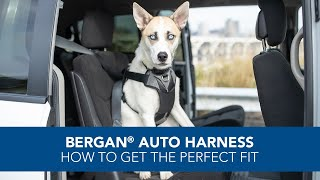 Bergan Auto Harness Large for Dogs 50-80 Pounds