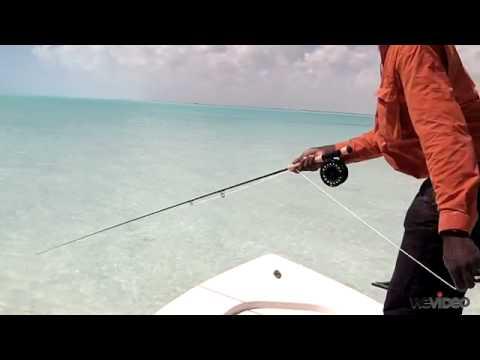 Stripping To A Bonefish - Capt. Shawn Leadon - Bonefishing - Andros Island Bonefish Club