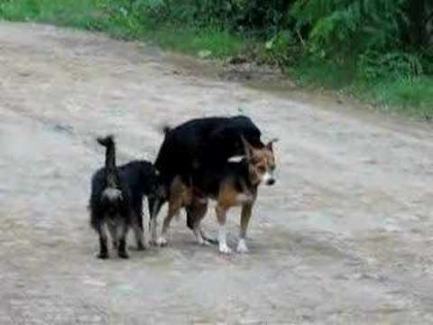 dog 3some