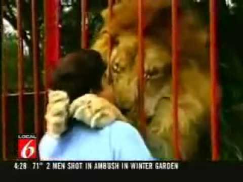 Nụ hôn thân thiết giữa người và sư tử