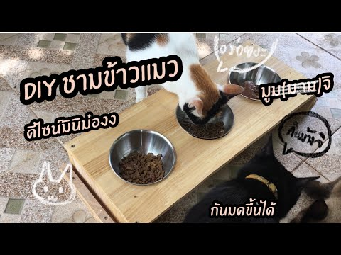 ชามข้าวแมว DIY มินิมอล กันมดขึ้นอาหารแมว
