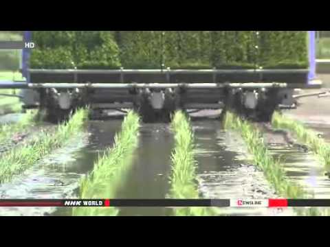 Nclear Watch: Japan Resumption of rice farming slow in Fukushima (06/11/2014)